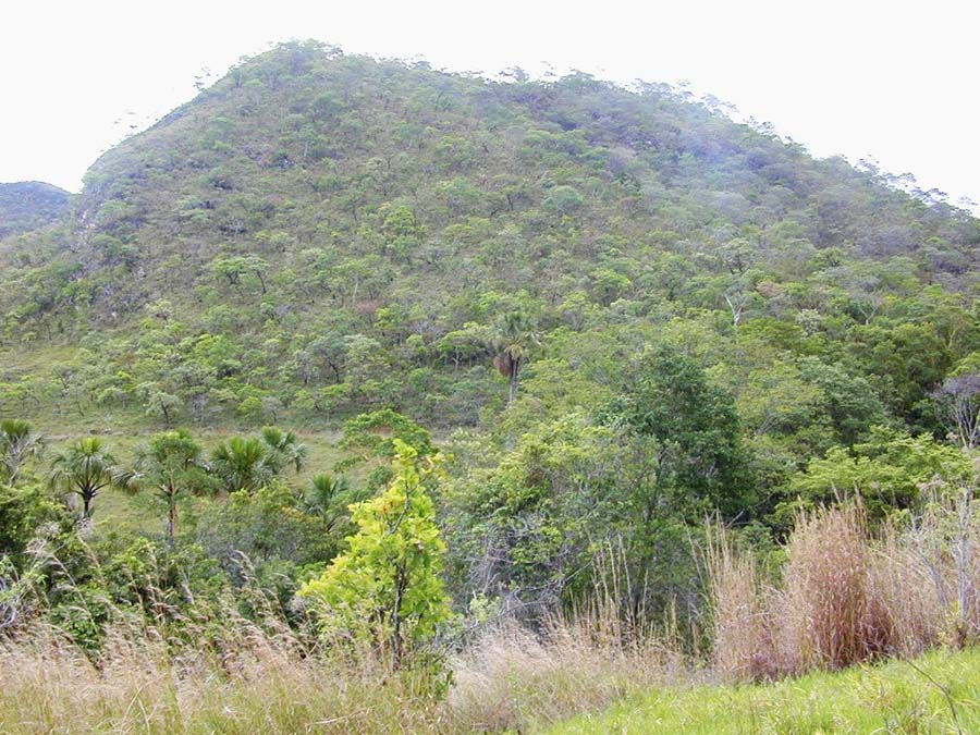 walmart forest hill