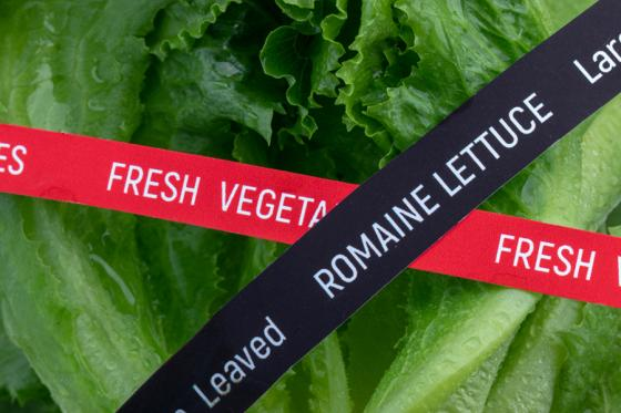 FDA Releases Findings From Romaine Lettuce Investigation