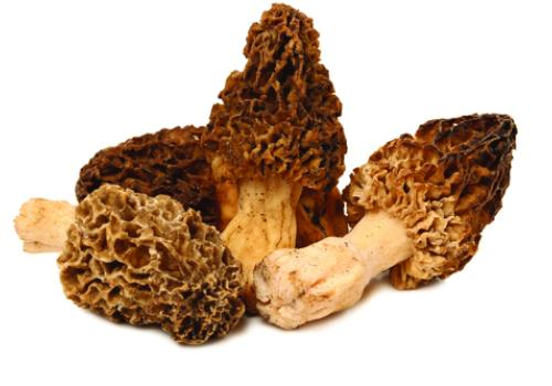 Morel mushrooms, with a nutty smell and meaty texture