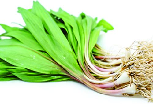Ramps, or wild onions