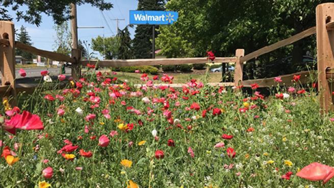 Walmart's Pollinator Gardens