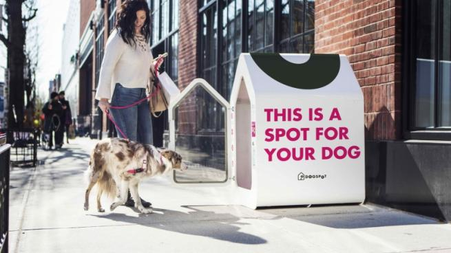 Albertsons Latest Grocer to Offer Doghouses for Shoppers' Pets