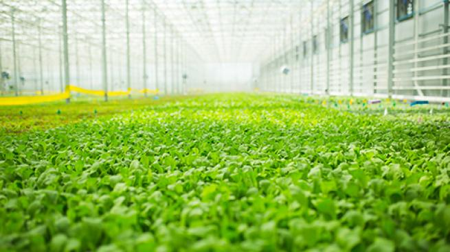 BrightFarms Building Next Greenhouse in North Carolina