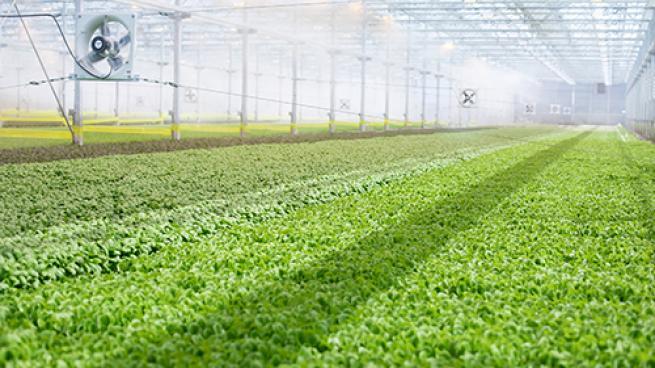 All VA Food Lions to Carry BrightFarms Salad Greens