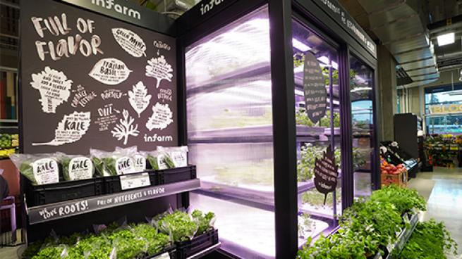 Sobeys, Safeway, Thrifty Foods Stores Adding Hyrdoponic Farms
