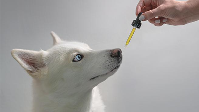 Pet Owners Making the Cannabis Connection