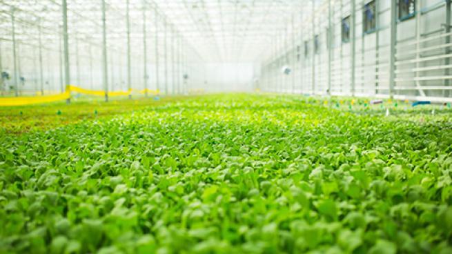 BrightFarms Breaks Ground on Greenhouse Farm