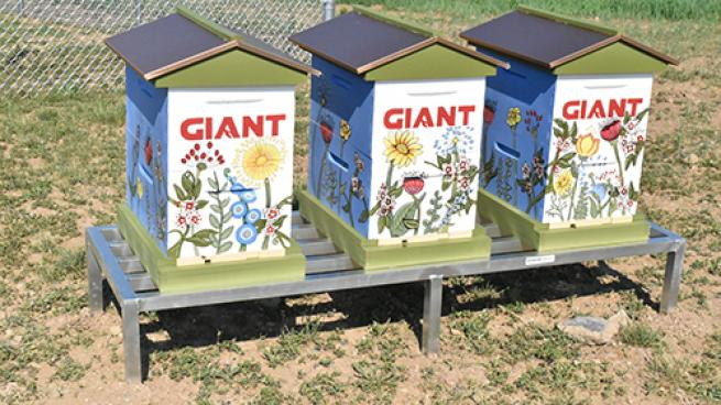 The Giant Co. Completes HQ Pollinator Field