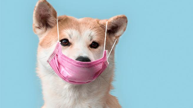 Publix Filling Pet Prescriptions