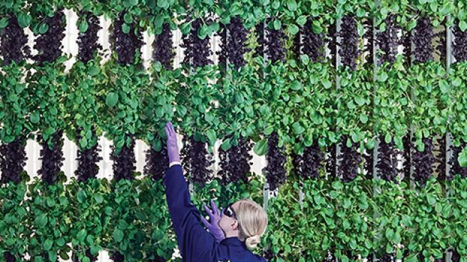 Cultivating Better Produce With Hydroponics