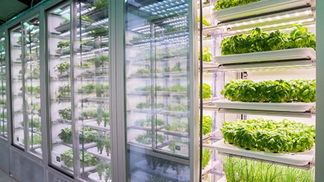 Whole Foods Installs Vertical Farms in London Stores Infarm