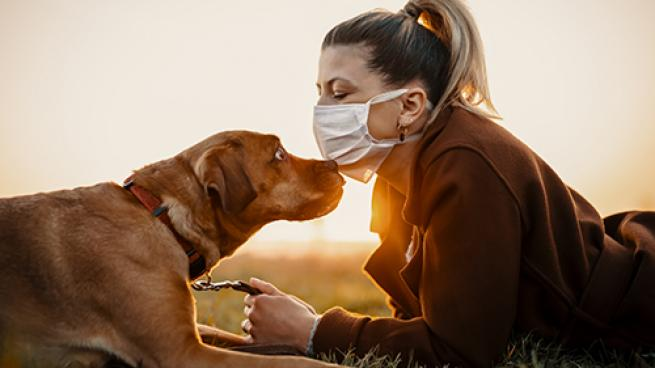 Pet Care in a Pandemic