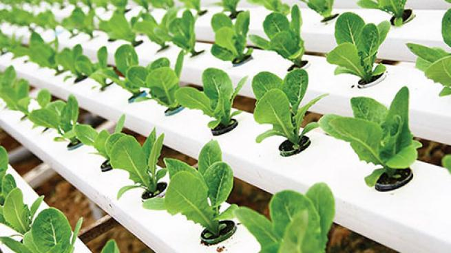 NGA Show, Indoor Ag-Con to Co-Locate in Vegas Independent Grocers Vertical Farming