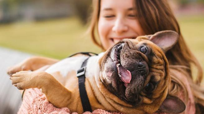 Walmart Grows Pet Services Petplan Rover