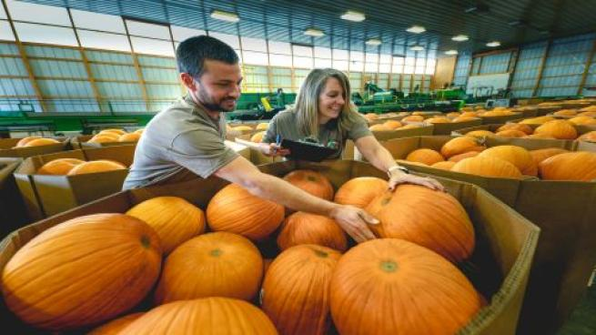 Meijer Expects Great Pumpkin Demand This Year