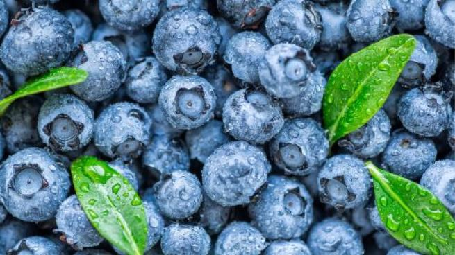 Blueberry Groups Add New Nutrition and Health Research Leadership Position