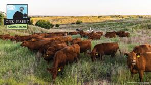 Open Prairie® Natural* Meats