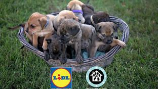 Lidl Operations Paws for Homes Retail to the Rescue