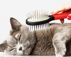 Gaining Share With the Well-Groomed Pet