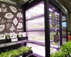 Sobeys, Safeway, Thrifty Foods Stores Adding Hyrdoponic Farms