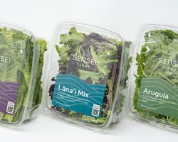 Hyper-Local, Nutrient Rich Food Poised for Huge Growth