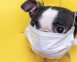 Pet Retail Sales Gaining During the Pandemic