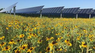 Walmart Moves to Protect Pollinators From Pesticides Friends of the Earth