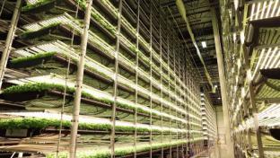 Indoor Vertical Farming Breaks Ground in Virginia
