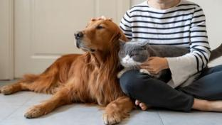 Walmart's Pet Prescription Program Expands to Sam's Club