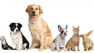 3 Trends Driving Post-Pandemic Pet Category Growth