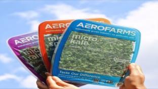 AeroFarms Shows Hardy Growth With Strategic Partnerships