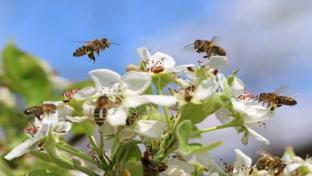 Meijer Aims to Protect Pollinator Health With Updated Policies
