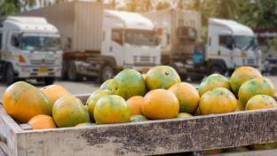 Retailer/Wholesaler Group Launch Traceability Network