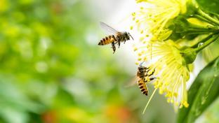 Giant Eagle, Whole Foods, Walmart Top Bee-Friendly Retailer Scorecard Friends of the Earth